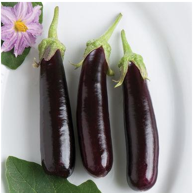 Percent of farmers and non-farmers identifying the vegetable pictured as an eggplant or brinjal